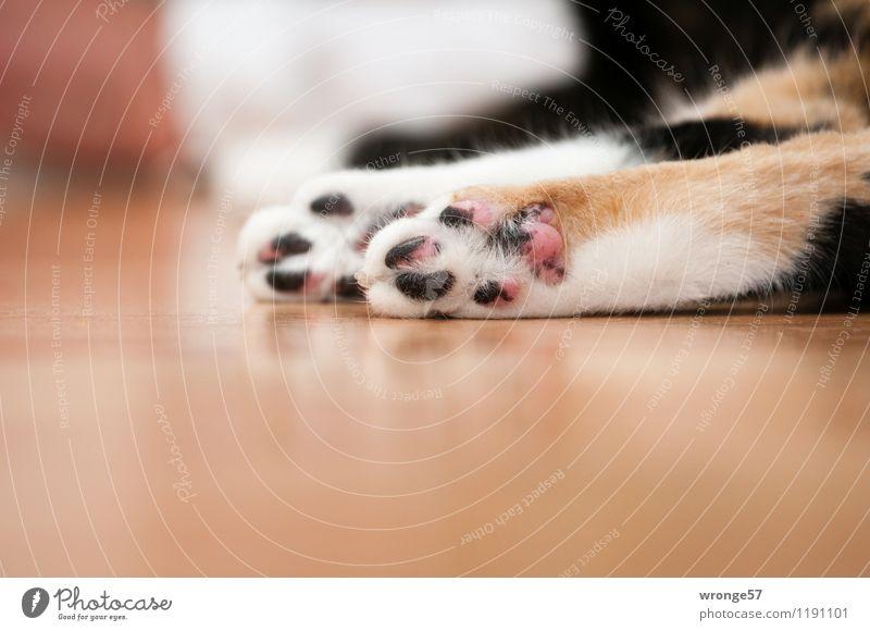 Samtpfötchen Tier Haustier Katze Fell Pfote Hauskatze 1 liegen schlafen kuschlig weich mehrfarbig ruhend Katzenpfote Farbfoto Gedeckte Farben Innenaufnahme