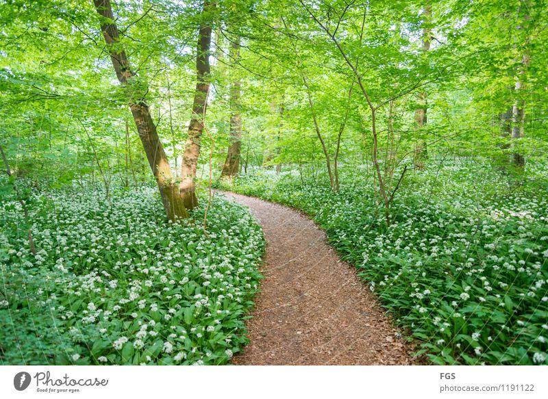 Waldspaziergang wandern Natur Pflanze Sonnenlicht Frühling Sommer Schönes Wetter genießen Freundlichkeit schön Wärme weich Glück Lebensfreude Begeisterung ruhig