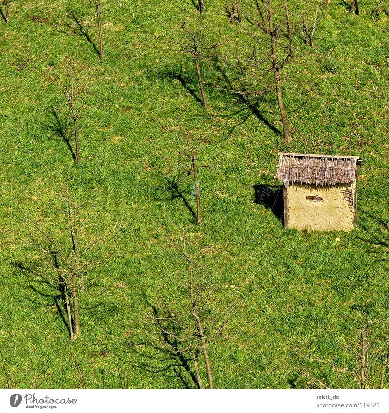 Schutz..Hütte Baum Wiese Feld klein Wetter Frucht Schutz Landwirtschaft Hütte Unwetter Scheune Apfelbaum Plantage Birnbaum Streuobstwiese