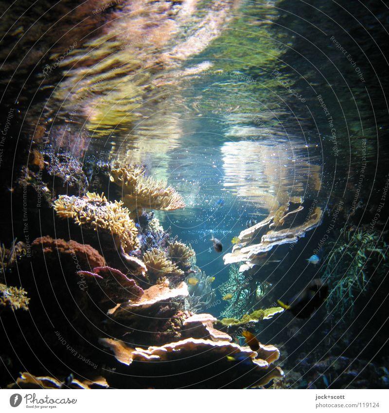 Buntes Leben Natur schön Farbe Wasser Meer Unterwasseraufnahme Wärme Leben Schwimmen & Baden Gesundheit Stein hell Wachstum leuchten weich Lebensfreude