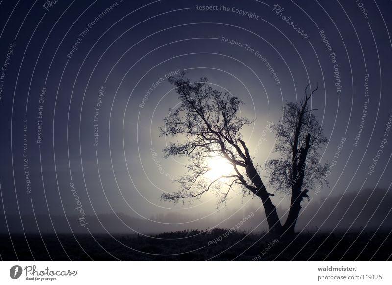 Baum am Morgen Natur Himmel Sonne blau ruhig Einsamkeit Wiese Landschaft Nebel Romantik Sehnsucht