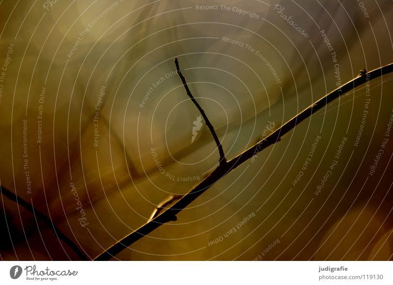Licht Baum Umwelt zart Gegenlicht glänzend schön Unschärfe träumen Farbe Zweig Natur Ast Punkt Linie Reflexion & Spiegelung