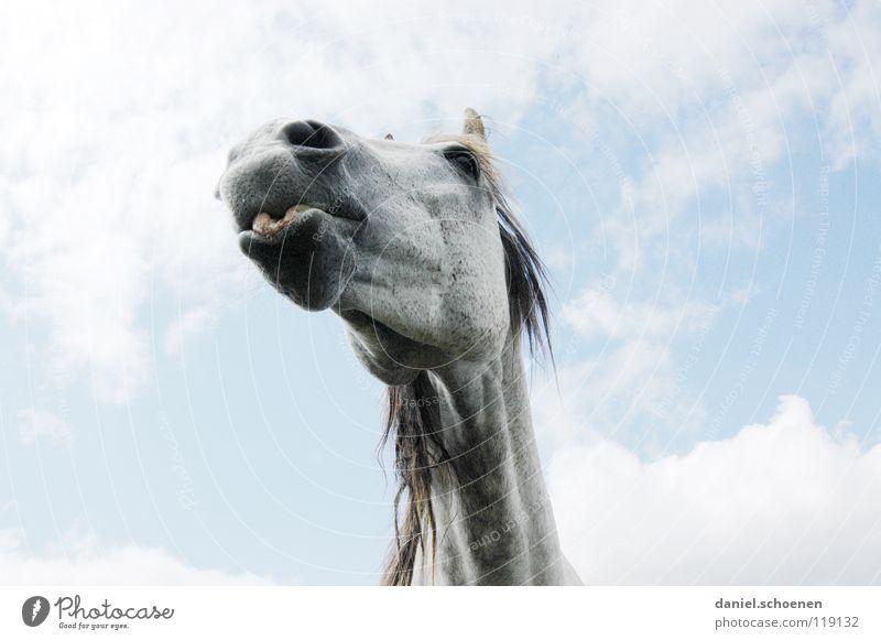 Perspektive des Fotografen nach dem Abwurf Himmel Ferien & Urlaub & Reisen blau grün schön Sommer Wolken Tier Umwelt Auge Wiese Gras Wetter Landwirtschaft Pferd