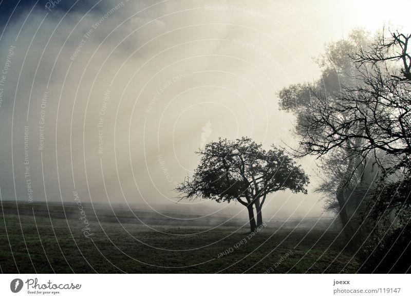 Hoffnung Feld Baum Baumreihe Bodennebel Erholung Herbst Idylle Morgen Denken Nebel Nebelwand unklar poetisch Romantik ruhig Sonnenenergie Sonnenlicht