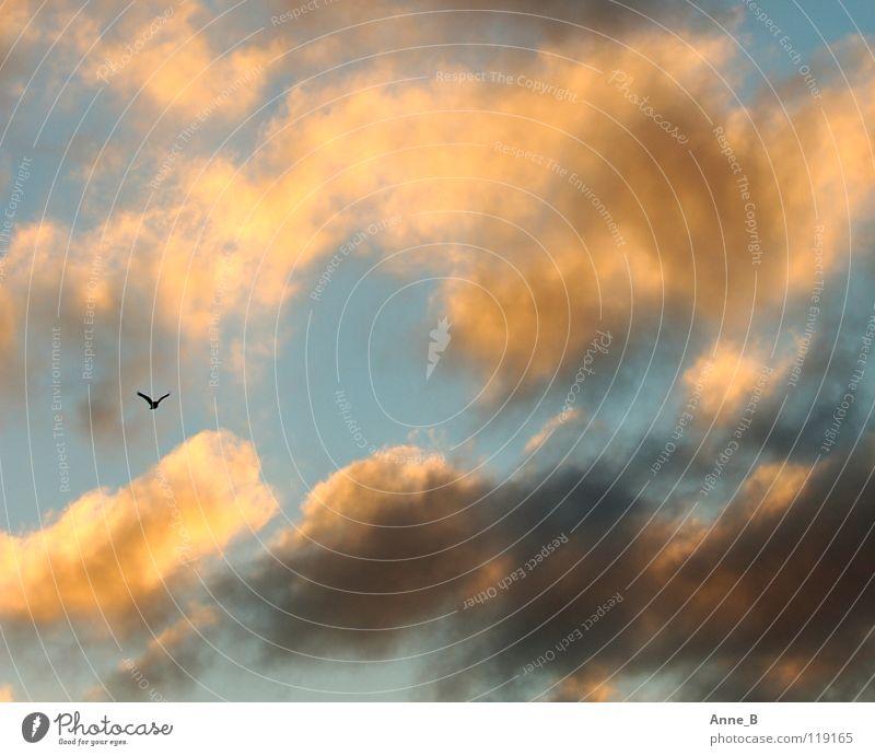 Vogelfrei Freiheit Luft Himmel Wolken Flügel 1 Tier Bewegung fliegen klein blau gelb schwarz ruhig einzigartig Leichtigkeit Natur orange Sonnenlicht grau