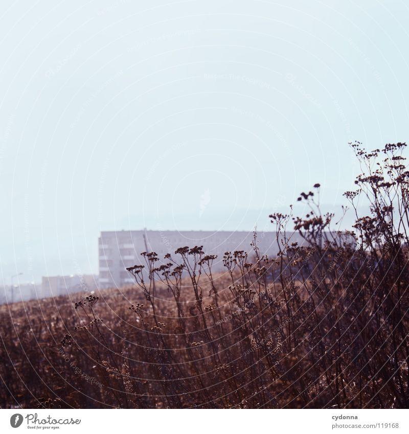 STILLSTAND Winter kalt Einsamkeit ruhig Wiese gefroren Stimmung Sehnsucht Feld Erscheinung bewegungslos Horizont Gedanke Erfahrung Jahreszeiten Wohnung Block