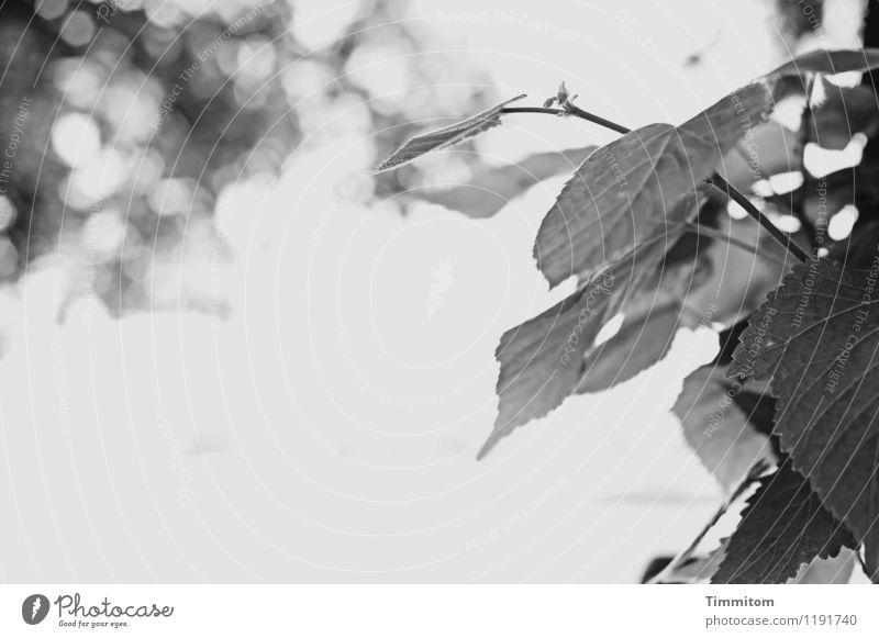 Blick auf den Rhein. Natur Pflanze Sommer Wasser weiß Blatt schwarz Umwelt Gefühle natürlich Küste grau Wachstum ästhetisch Wassertropfen einfach