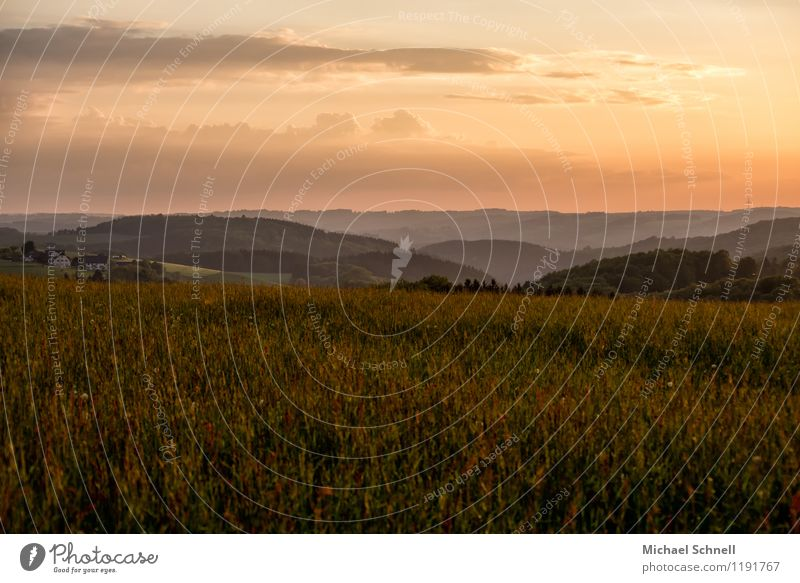 Weite Umwelt Natur Landschaft Sonnenaufgang Sonnenuntergang Hügel Sauerland natürlich Ferne Horizont Farbfoto Außenaufnahme Textfreiraum oben Sonnenlicht