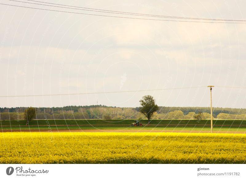 Traktor hinterm Rapsfeld Landschaft Wald Blüte Arbeit & Erwerbstätigkeit Feld Blühend Landwirtschaft Getreide Werkzeug Maschine Forstwirtschaft Verkehrsmittel
