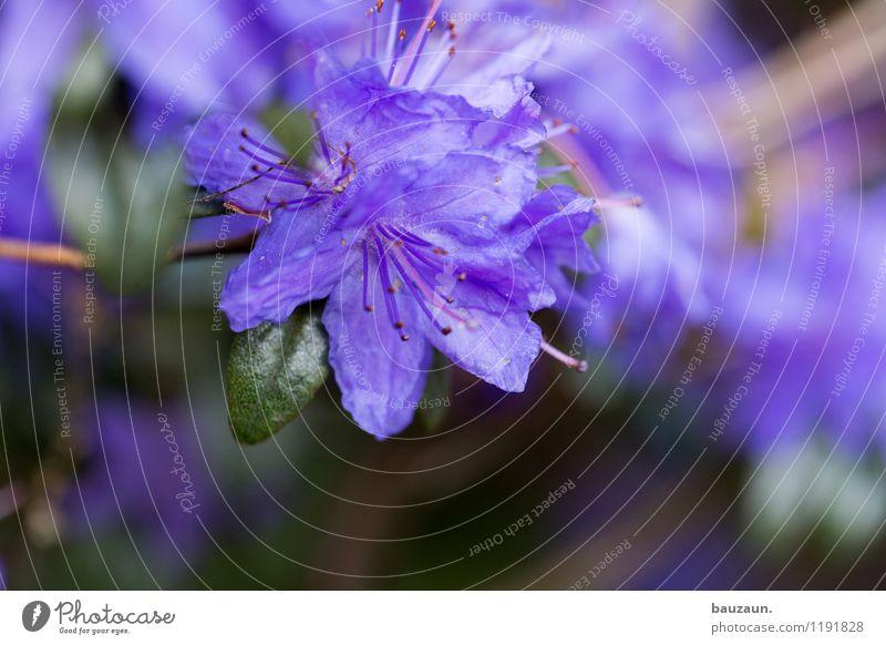 lila. Sommer Garten Umwelt Natur Landschaft Pflanze Blume Blüte Park Blühend verblüht schön grün violett Frühlingsgefühle Farbe Wachstum Wandel & Veränderung