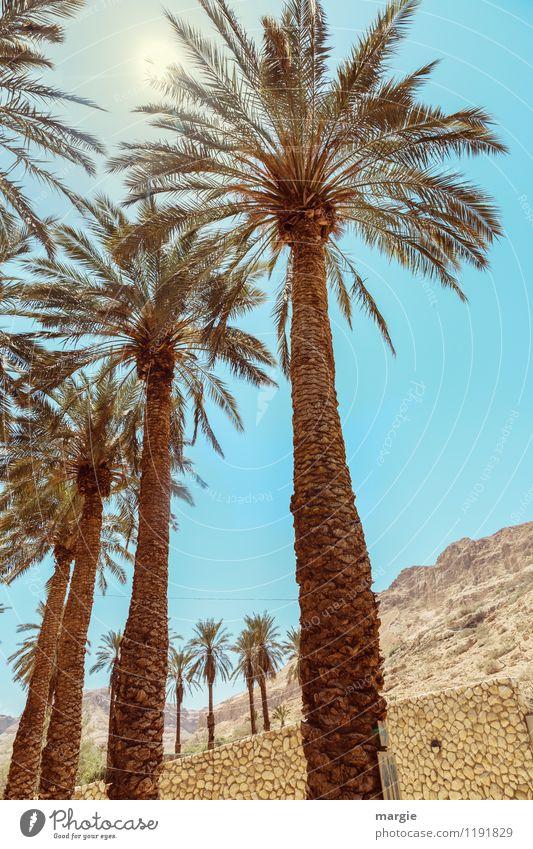 Palmen Himmel Natur Ferien & Urlaub & Reisen Sommer Baum Erholung Landschaft ruhig Ferne Wand Mauer Sand Tourismus Ausflug Schönes Wetter Abenteuer