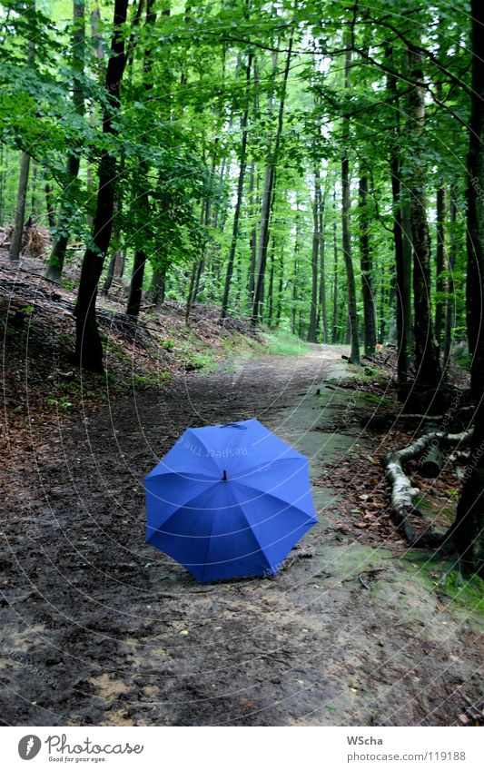Blauer Schirm 2007 Natur grün blau Farbe Wald Wege & Pfade Rätsel