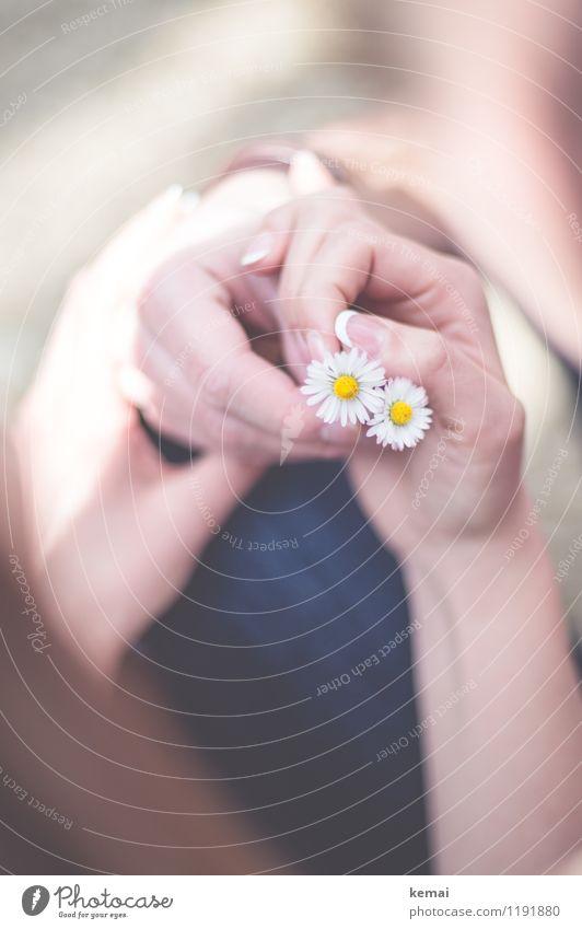 Zu zweit Mensch maskulin feminin Paar Partner Leben Hand Finger 2 Blume Gänseblümchen festhalten Duft Wärme Glück Zufriedenheit Lebensfreude Sympathie