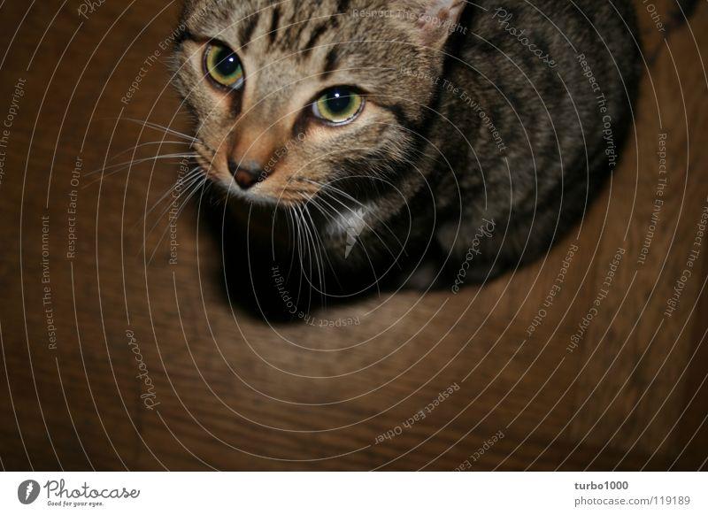 d ü s e _ i s t _ m e i n _ k a t e r Katze Blick hocken betteln Appetit & Hunger Futter füttern Schwärmerei Schnurren Miau Vertrauen Schwäche schön cat