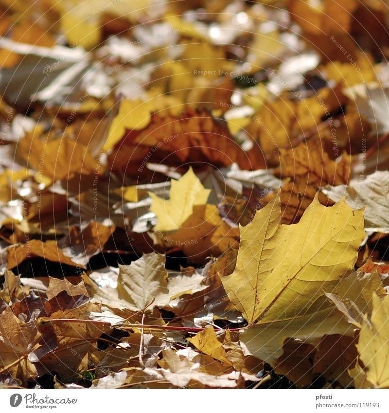 schöner Herbst Natur Baum Blatt ruhig gelb Wärme Traurigkeit braun orange gold Vergänglichkeit Ast Ende Jahreszeiten welk