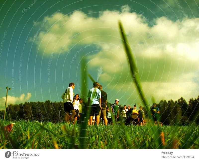 ::: Froschperspektive ::: Sommer Wolken grün Hintergrundbild Spielen weiß dunkel Jugendliche Versammlung klein Halm Tiefenschärfe Tier ökologisch Luft frisch