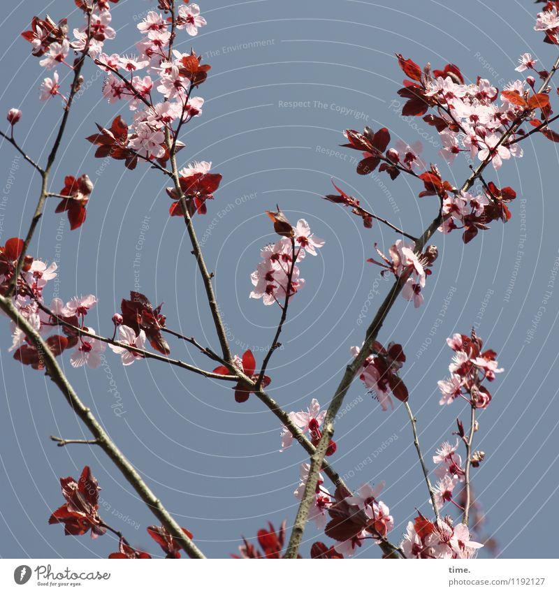 dehnen & strecken (I) Himmel Natur Pflanze schön Baum Blatt Leben Blüte Frühling natürlich Garten hell wild Wachstum ästhetisch Energie
