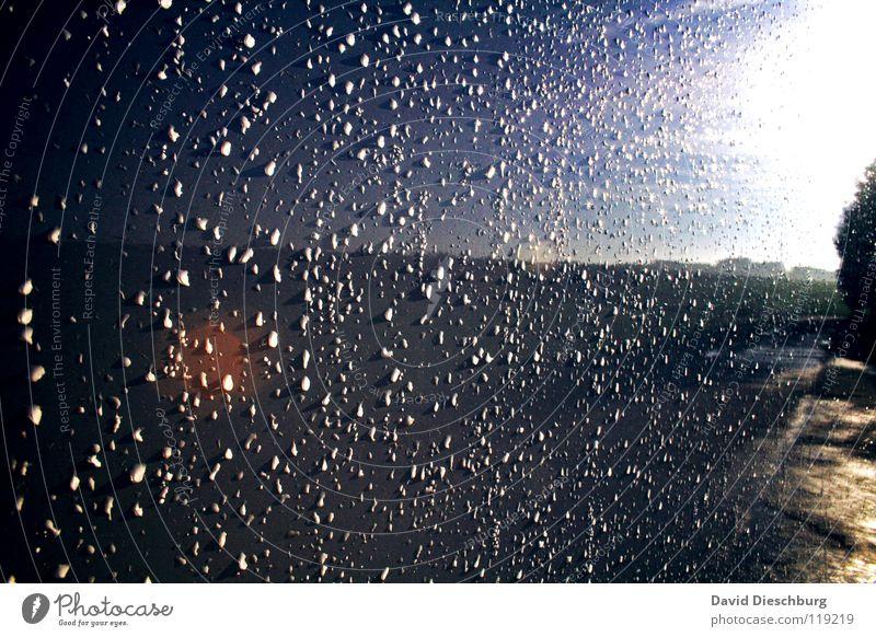 After the storm Wand Spiegel Baum Feld rot schwarz gelb grün Wassertropfen Himmel Regen Wege & Pfade blau Punkt Sonne Erde Schatten Lampe Reflektion Wolkenfrei