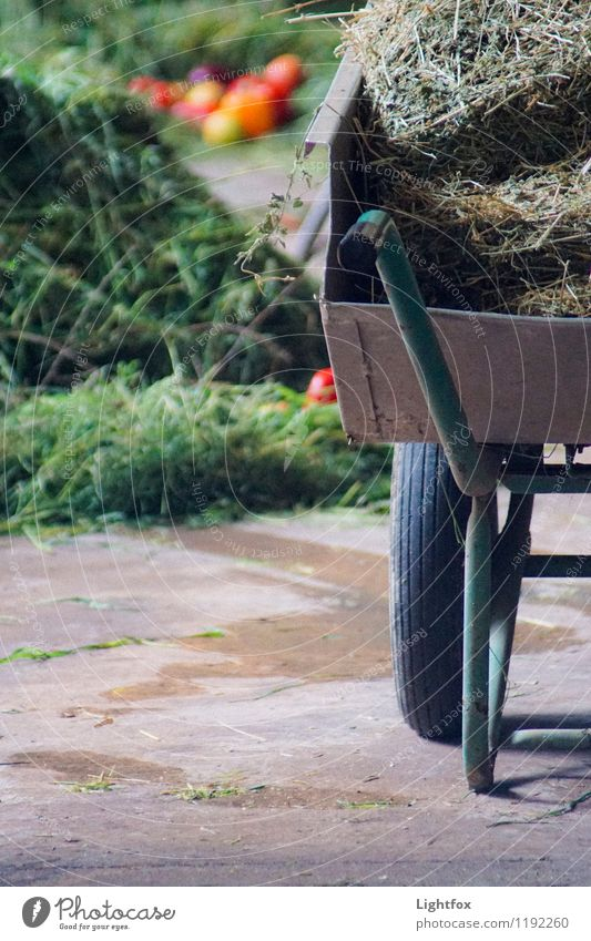 Schubs Karre Gartenarbeit Arbeitsplatz Landwirtschaft Forstwirtschaft Handel Handwerk Baustelle Schubkarre Kindheit Dienstleistungsgewerbe Stimmung Landleben