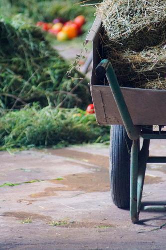 Schubs Karre Stimmung Metall Kindheit Baustelle Landwirtschaft Ernte Bauernhof Dienstleistungsgewerbe Handwerk Handel Arbeitsplatz Gartenarbeit Forstwirtschaft