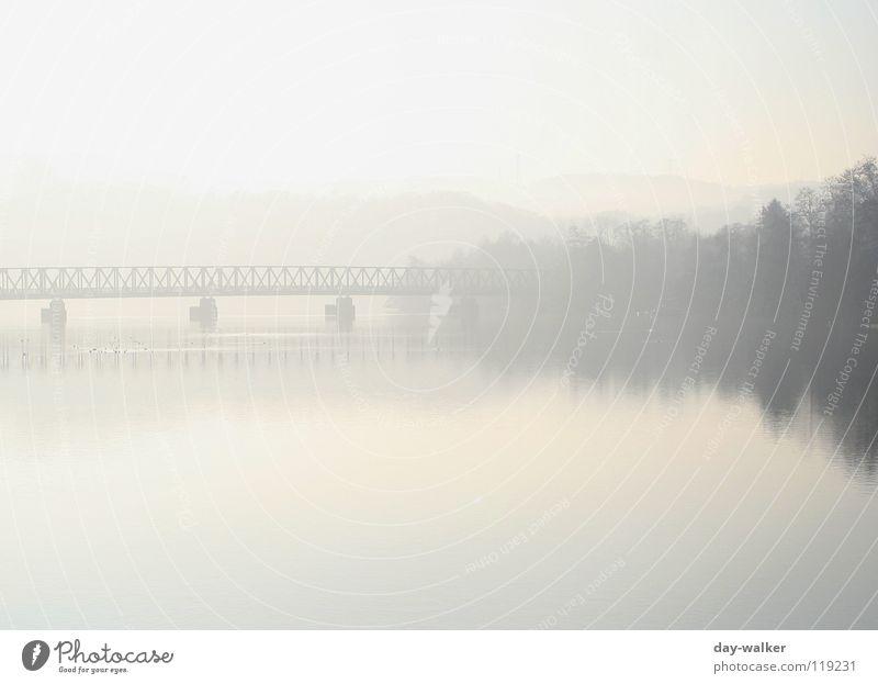 Silence II See ruhig Erholung Nebel Morgen aufwachen Wald Baum Reflexion & Spiegelung Oberfläche Vogel Säule Fußgängerübergang Panorama (Aussicht) Wasser Küste