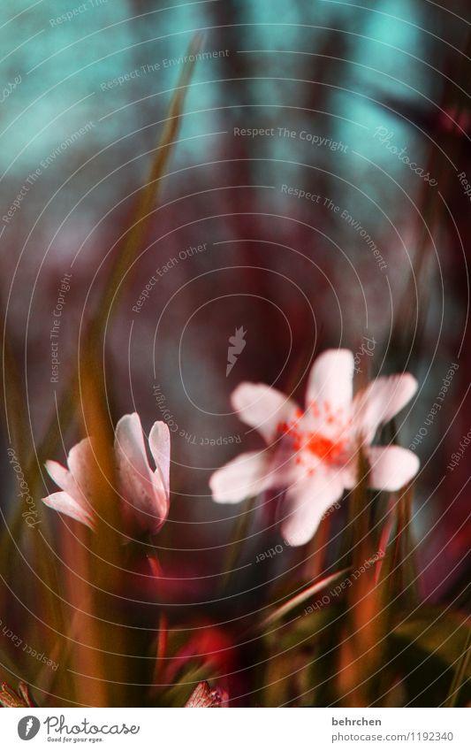 buschiges windiges röschen Himmel Natur blau Pflanze schön Sommer weiß Blume Blatt Wald Blüte Frühling Herbst Wiese Gras klein