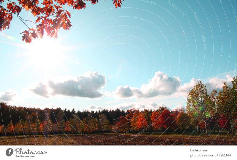 schönste jahreszeit? Natur Pflanze Himmel Wolken Herbst Schönes Wetter Baum Blatt Feld Wald Wärme blau orange Baumstamm Ast welk Herbstlaub Eiche Eichenblatt