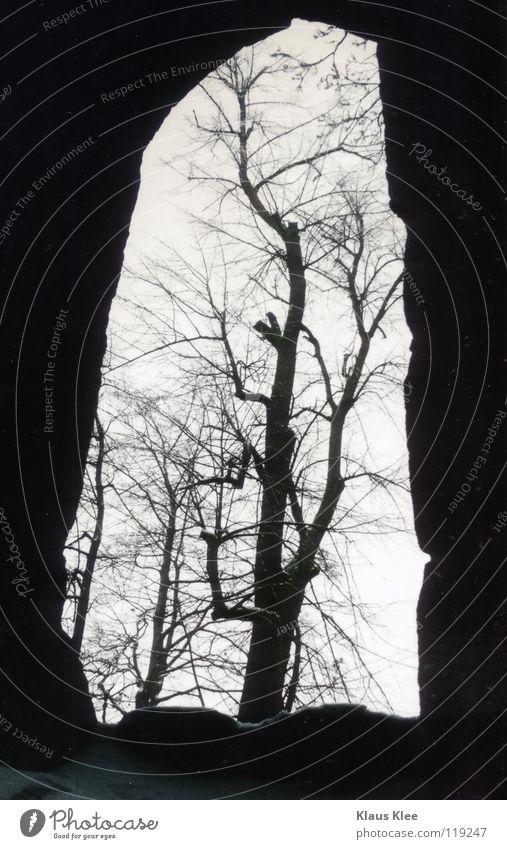 MY TRIP OVER 50 METERS :: Baum Fenster dunkel schön Winter Tunnel Vergänglichkeit Loch hell Rahmen Detailaufnahme