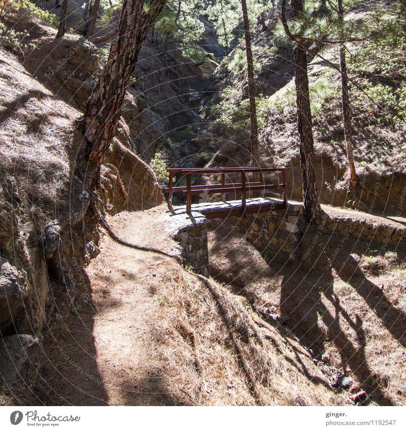 La Cumbrecita Natur Landschaft Erde Frühling Schönes Wetter Wärme Pflanze Baum Sträucher Wald Vulkan Caldera de Taburiente La Palma dunkel braun grün schwarz