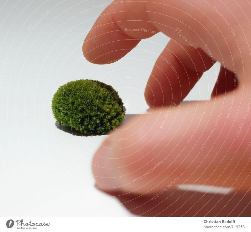Moos kügelchen Hand Finger grün gelb weiß grün-gelb Eukaryot Laubmoos Algen Freisteller Mensch Schatten Mooskugel Eucaryoten Hornmoos Grünalge Walsmoos
