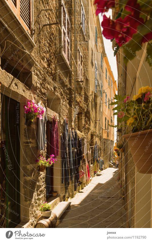 Schmale Gasse Ferien & Urlaub & Reisen alt schön Sommer Blume Haus Wand Wege & Pfade Mauer braun Fassade Tourismus Tür Idylle Italien historisch
