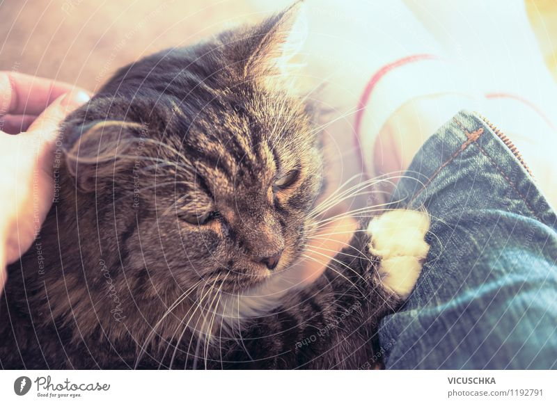 Mit alter Katze schmusen Mensch Frau Hand Haus Tier Freude Erwachsene Liebe Gefühle Lifestyle Stimmung Freundschaft Wohnung liegen