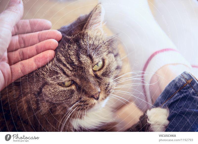 Mit Katze kuscheln Mensch Frau Hand Freude Tier Erwachsene Liebe Gefühle Lifestyle Zusammensein Freundschaft Kopf Häusliches Leben genießen retro