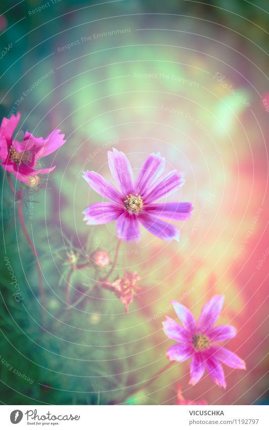 Rosa Blumen im Traumgarten Natur Pflanze Sommer Blume Blatt Wald Umwelt Frühling Blüte Herbst Wiese Stil Hintergrundbild Garten rosa Park