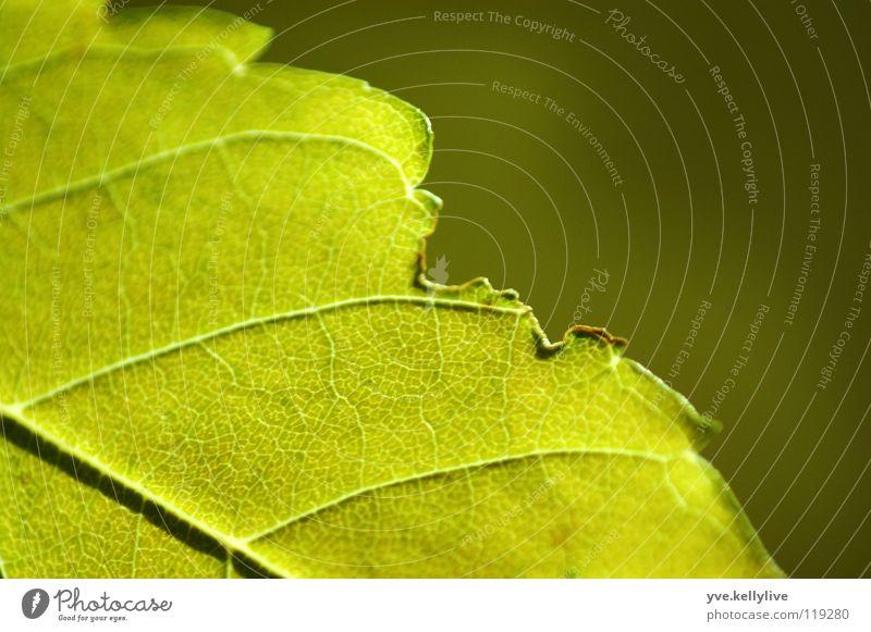Blatt I grün Blatt Fenster diagonal dunkelgrün hellgrün