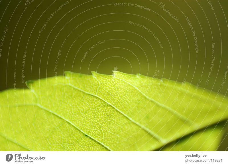 Blatt II grün Blatt Fenster Teilung dunkelgrün hellgrün