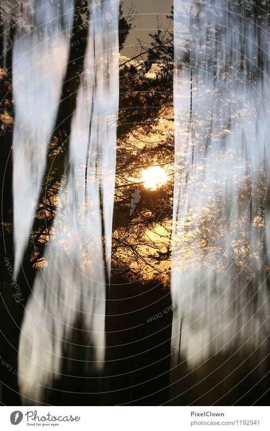 Zauberwald Natur Ferien & Urlaub & Reisen Pflanze Baum Einsamkeit Landschaft Tier Wald gelb Glück Holz Lifestyle braun Design Zufriedenheit Freizeit & Hobby