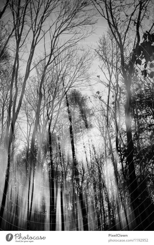 düster Natur Ferien & Urlaub & Reisen Pflanze weiß Baum Landschaft Blatt Tier dunkel Wald schwarz Traurigkeit Gefühle Stil Holz Kunst