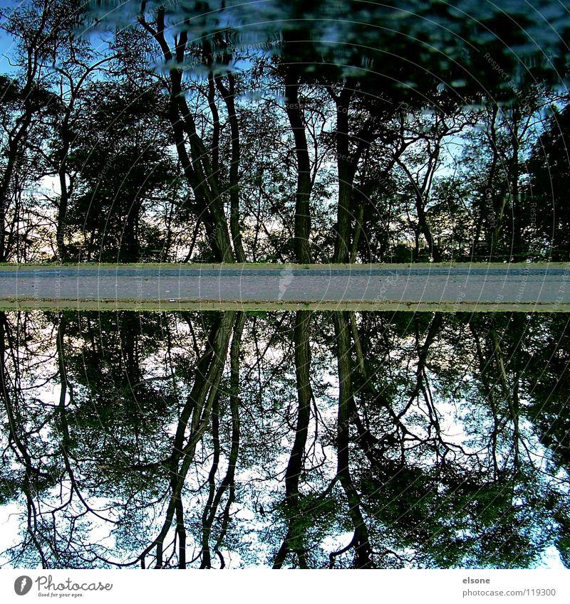 ::ZWEIFACH:: 2 Baum Wald Reflexion & Spiegelung Pfütze See fließen Elektrizität Rauschen Wellen rieseln sprudelnd Quelle Gluckern Geplätscher Gewässer Strand