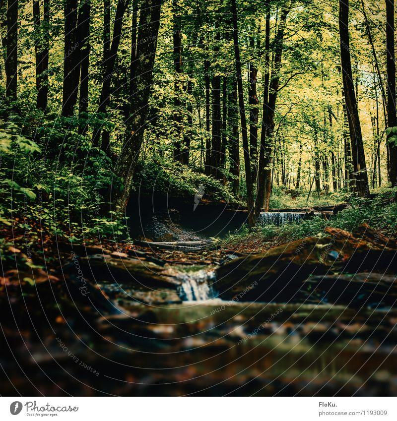 kleiner Bach im Wald Umwelt Natur Landschaft Urelemente Erde Wasser Wassertropfen Pflanze Baum Gras Sträucher Moos natürlich grün Bachufer Wasserfall mystisch