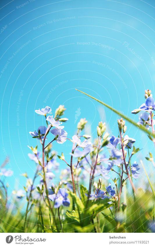 wo bleibste??? Himmel Natur Pflanze blau schön Sommer Blume Blatt Wärme Frühling Blüte Wiese Gras klein Garten Park