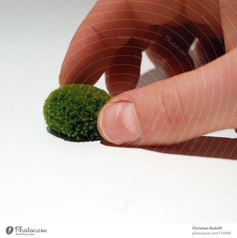 Moos kügelchen Hand weiß grün gelb Finger Moos Algen Laubmoos grün-gelb Eukaryot
