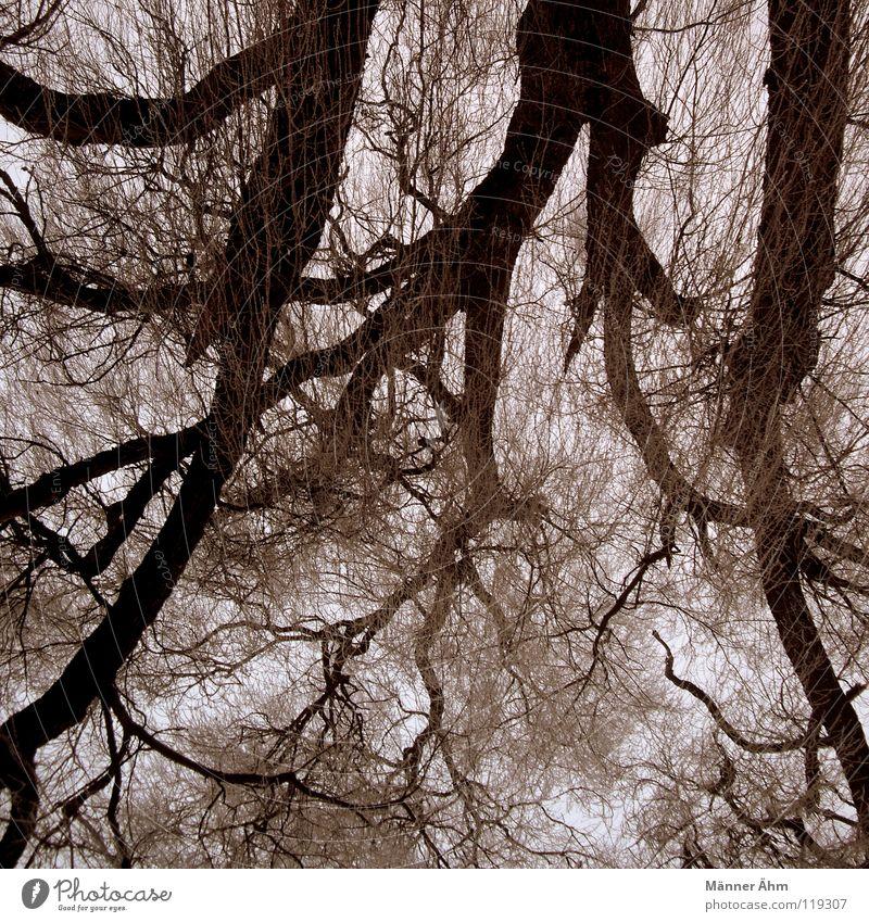 Nervenbahnen. Baum Wald Sträucher Holz Blatt Wolken Himmel Blut Eisenbahn Ast Baumstamm Gehirn u. Nerven