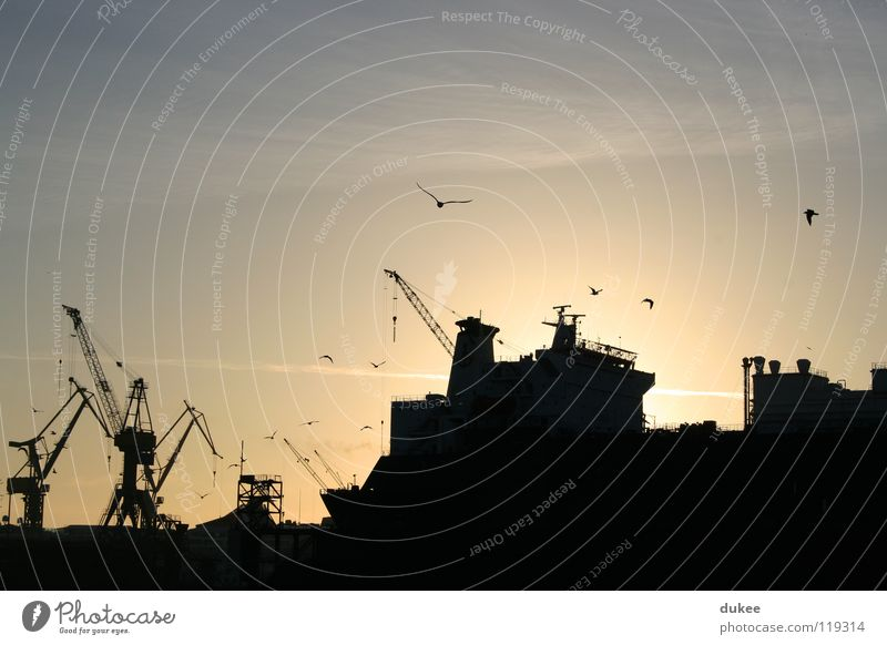 docks Kran Vogel Sonnenaufgang Macht Gegenlicht Neuanfang Industrie Hafen Winter Hamburg verschiffen Freiheit gigantisch die vögel