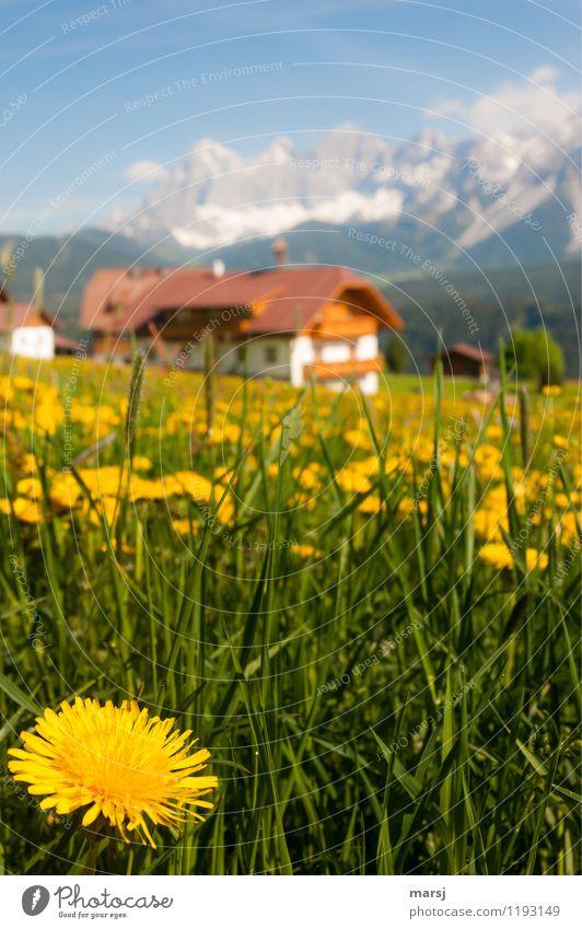 Urlaub am Bergbauernhof mit Soiblueme Himmel Natur Ferien & Urlaub & Reisen Pflanze Erholung Landschaft ruhig Berge u. Gebirge Frühling Blüte Wiese Gras