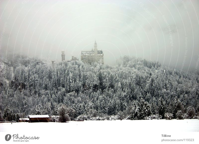 Neu Schwanstein im Nebel Baum Winter Wald Schnee Burg oder Schloss Bayern Neuschwanstein