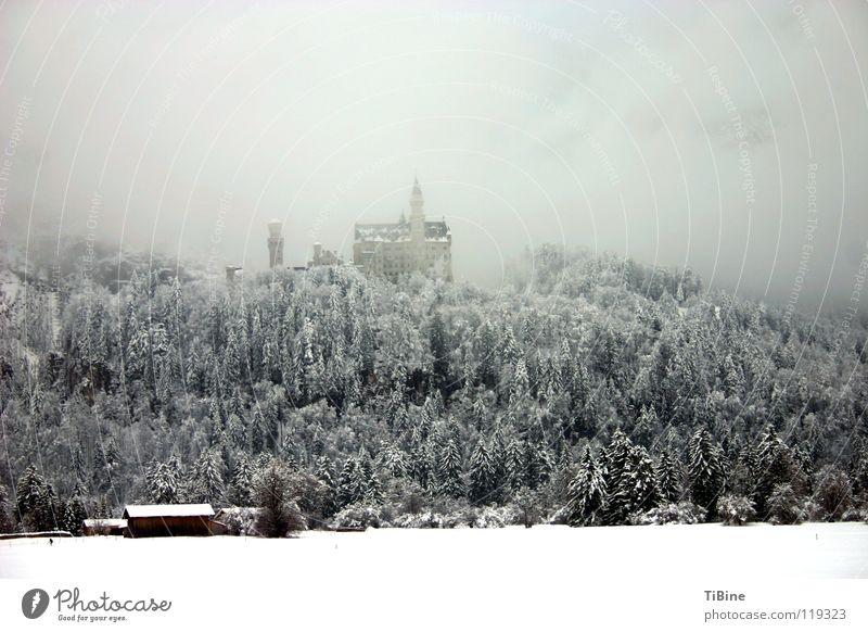 Neu Schwanstein im Nebel Winter Bayern Baum Wald Schnee Neuschwanstein Burg oder Schloss
