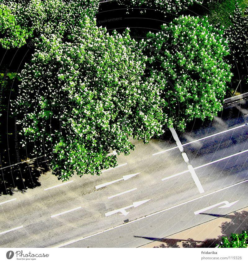 auf der spur Baum grün Pflanze Straße grau Wege & Pfade Pfeil Richtung Verkehrswege Baumkrone Orientierung Fahrbahn Fahrbahnmarkierung richtungweisend Richtungswechsel mehrspurig
