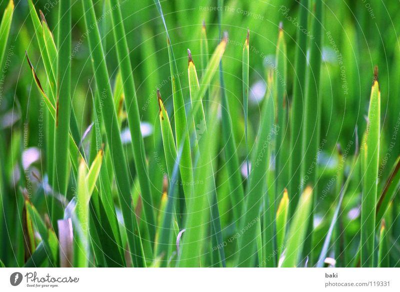 Ins Grüne rausgefahren grün Schilfrohr frisch Gras Natur mehrfarbig Pflanze Landschaft Küste leuchten Außenaufnahme