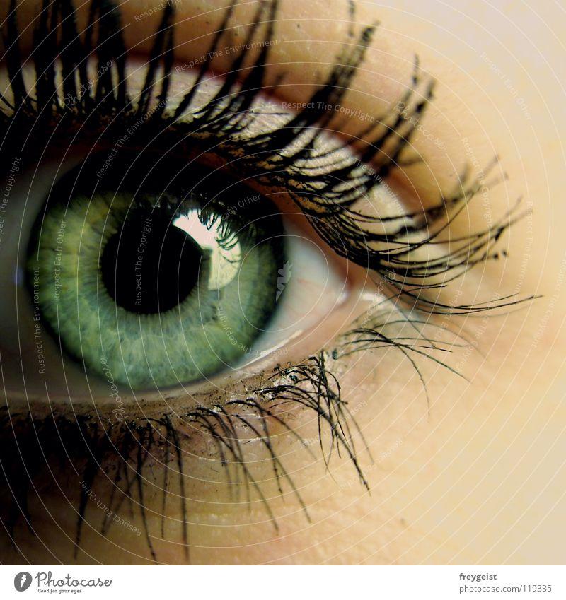 Ansehen grün schön schwarz Auge grau Haut zart nah Wimpern Mensch Regenbogenhaut